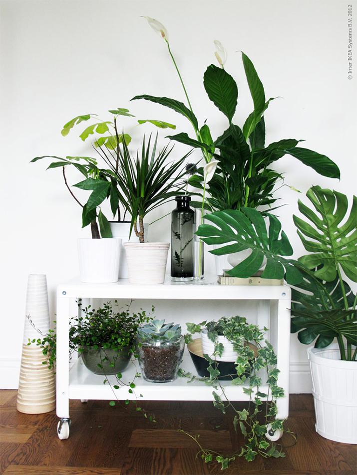 plants-home-decor-1